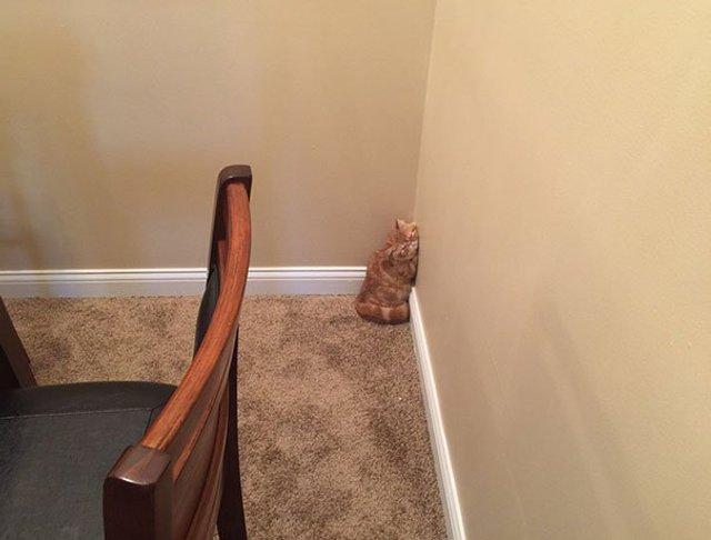 Після важкого дня: епічні фото котів, які заснули у дивних місцях - фото 319244