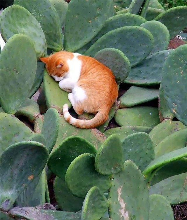 Після важкого дня: епічні фото котів, які заснули у дивних місцях - фото 319246