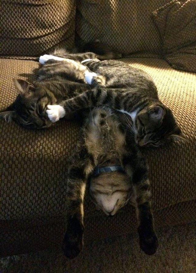Після важкого дня: епічні фото котів, які заснули у дивних місцях - фото 319247