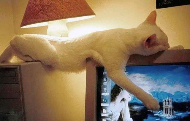 Після важкого дня: епічні фото котів, які заснули у дивних місцях - фото 319249