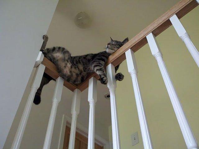 Після важкого дня: епічні фото котів, які заснули у дивних місцях - фото 319251