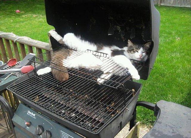 Після важкого дня: епічні фото котів, які заснули у дивних місцях - фото 319254