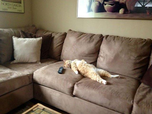 Після важкого дня: епічні фото котів, які заснули у дивних місцях - фото 319255