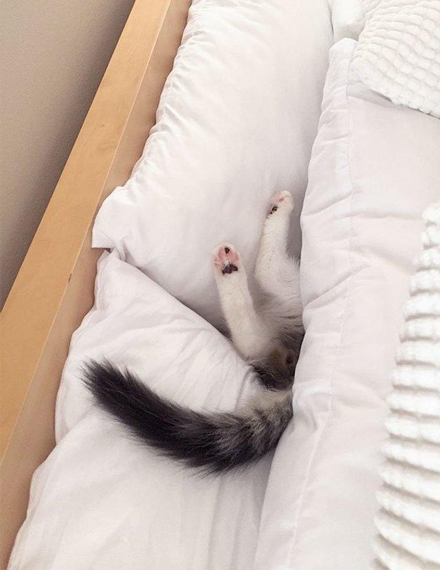 Після важкого дня: епічні фото котів, які заснули у дивних місцях - фото 319256