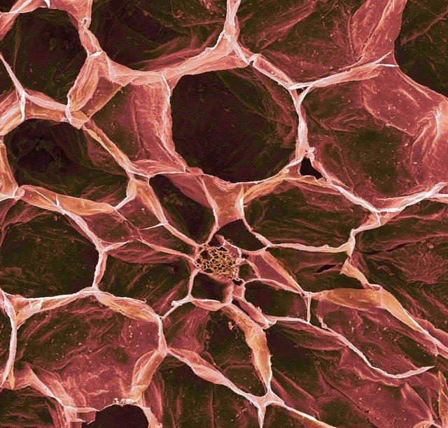 Як виглядає їжа під мікроскопом: вражаючі кадри - фото 320058