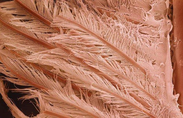 Як виглядає їжа під мікроскопом: вражаючі кадри - фото 320060