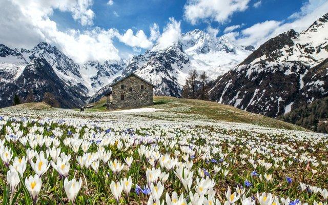 Весна в Альпах  - фото 321762