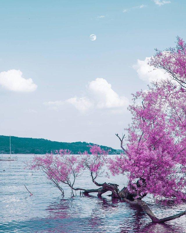 Рожевий сезон: захопливі фото світу у несподіваних кольорах - фото 322137