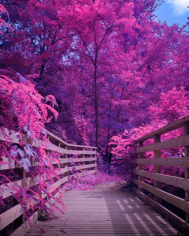Рожевий сезон: захопливі фото світу у несподіваних кольорах - фото 322142