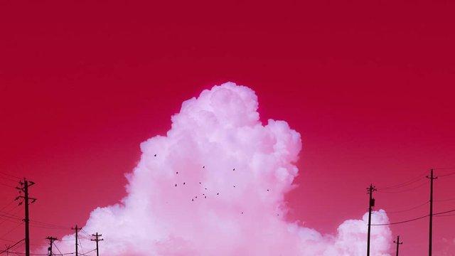 Рожевий сезон: захопливі фото світу у несподіваних кольорах - фото 322143