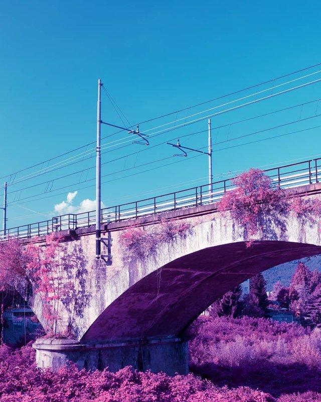 Рожевий сезон: захопливі фото світу у несподіваних кольорах - фото 322144