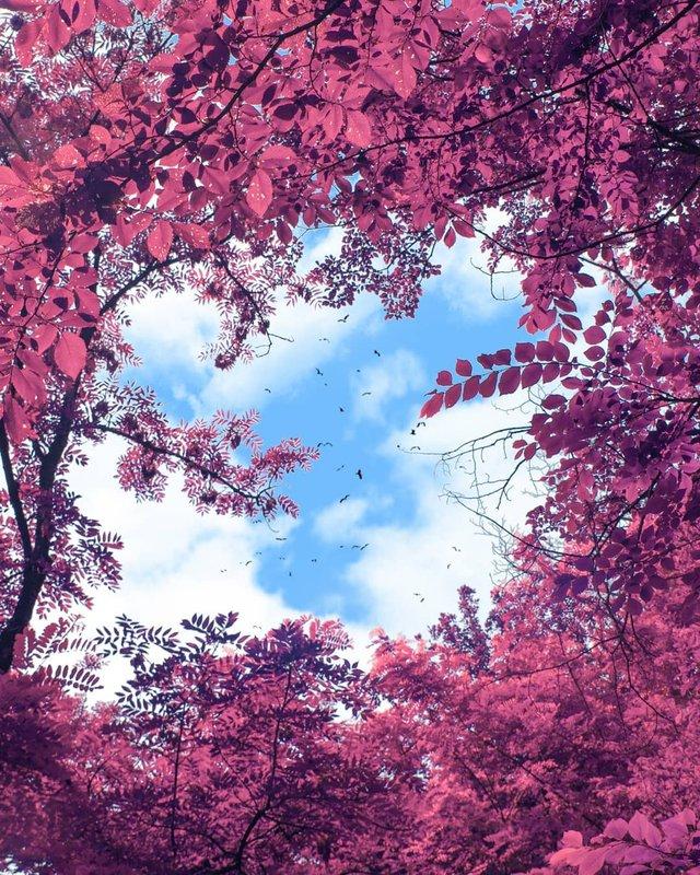 Рожевий сезон: захопливі фото світу у несподіваних кольорах - фото 322149