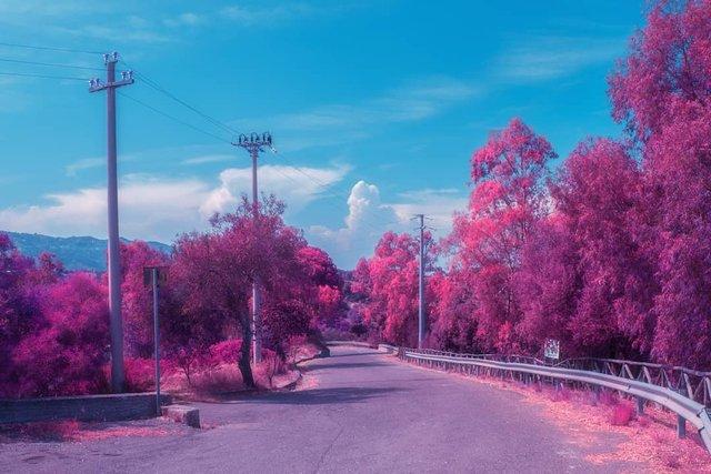 Рожевий сезон: захопливі фото світу у несподіваних кольорах - фото 322151