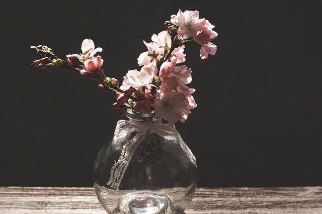 Сакури в України: коли і куди поїхати, щоб помилуватися цвітінням - фото 322221