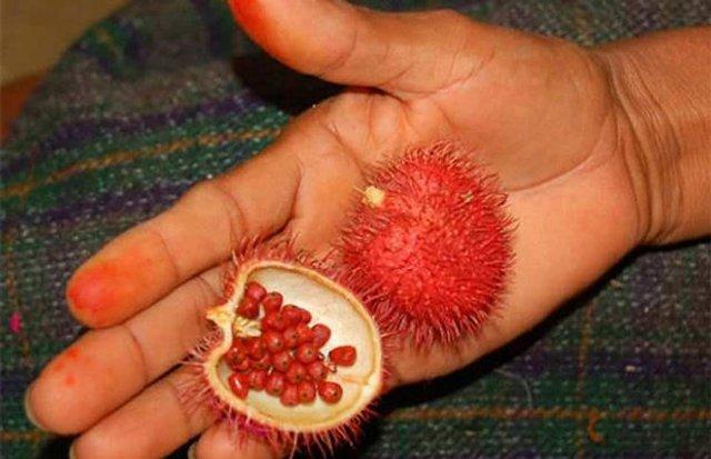 5 екзотичних фруктів, про які ви не чули - фото 322508