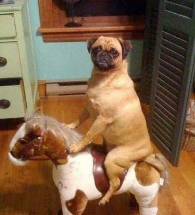 Що роблять собаки, коли нікого нема вдома: епічні фото - фото 323547