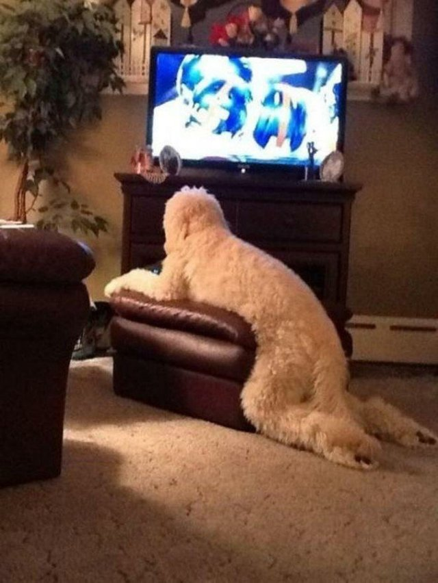 Що роблять собаки, коли нікого нема вдома: епічні фото - фото 323549
