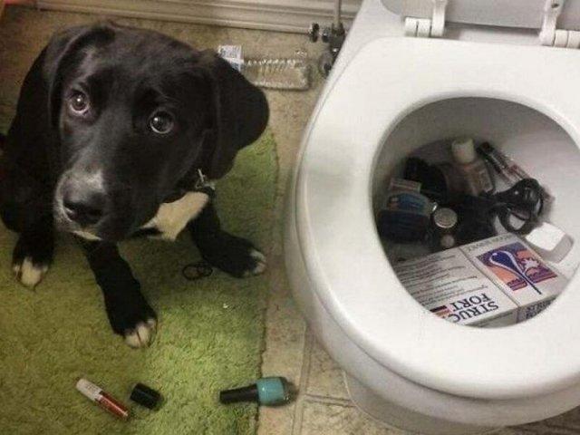 Що роблять собаки, коли нікого нема вдома: епічні фото - фото 323553