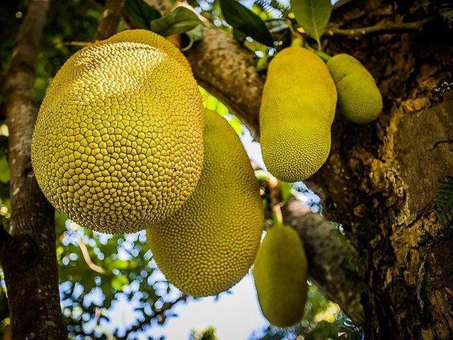 5 екзотичних фруктів зі всього світу, які варто спробувати - фото 324089