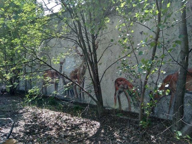 Природа перемагає бетони - фото 324111