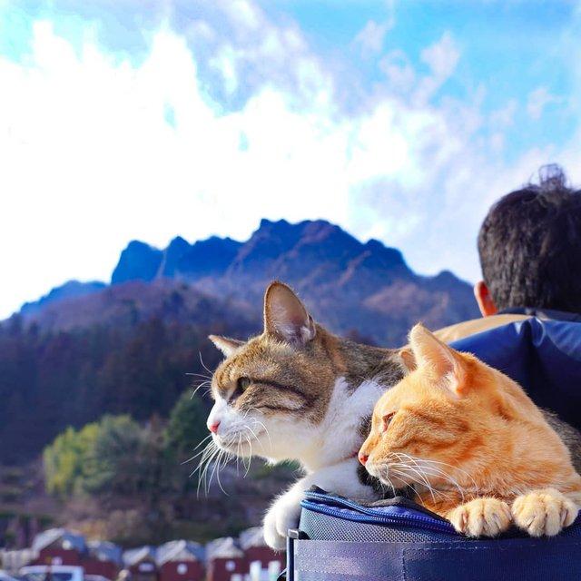 Японець подорожує країною з двома котами в рюкзаку - фото 324944