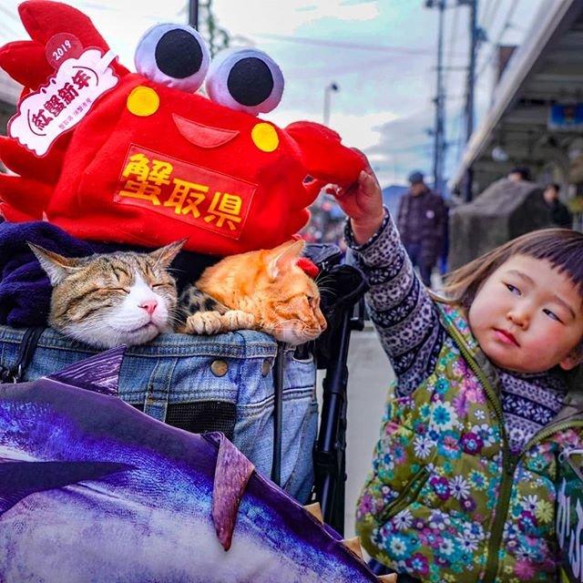 Японець подорожує країною з двома котами в рюкзаку - фото 324945