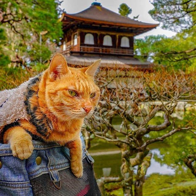 Японець подорожує країною з двома котами в рюкзаку - фото 324947
