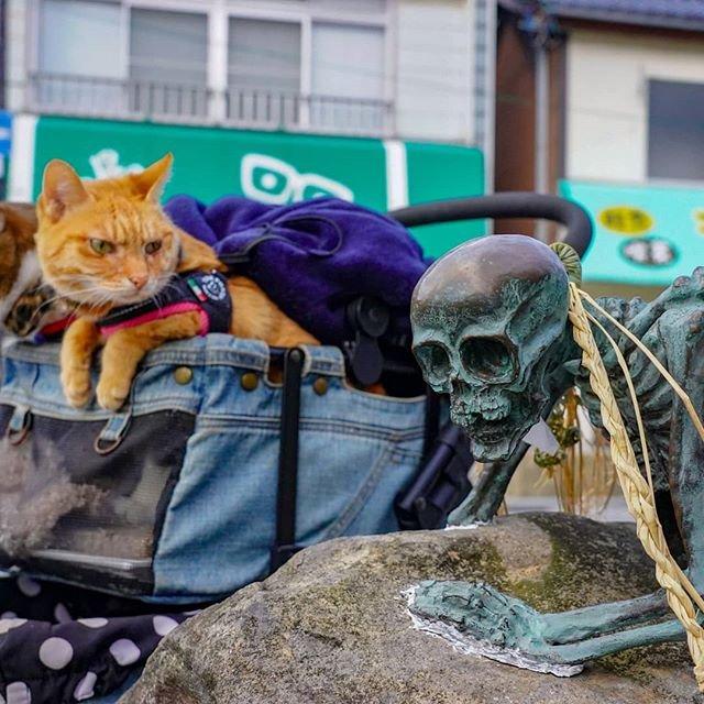 Японець подорожує країною з двома котами в рюкзаку - фото 324948