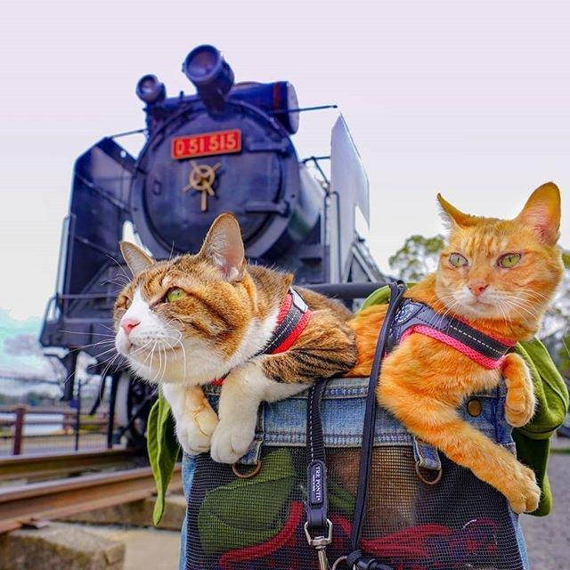 Японець подорожує країною з двома котами в рюкзаку - фото 324952