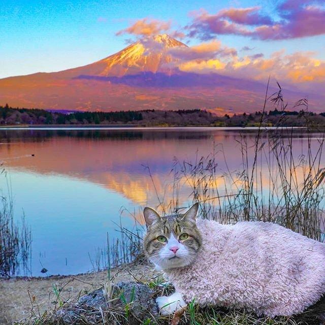 Японець подорожує країною з двома котами в рюкзаку - фото 324955