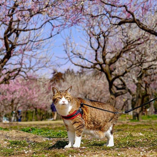 Японець подорожує країною з двома котами в рюкзаку - фото 324956