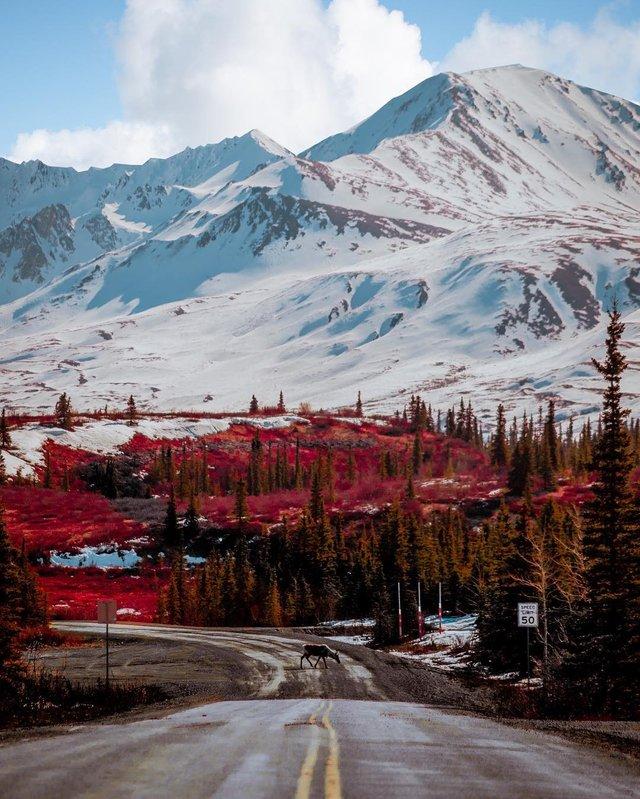 Фото Аляски, які змусять затримати погляд: захопливі кадри - фото 325021