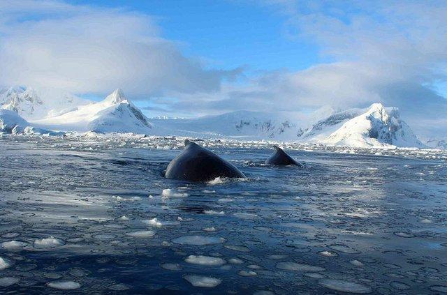 Українські полярники поділилися ефектними кадрами Антарктиди - фото 325260