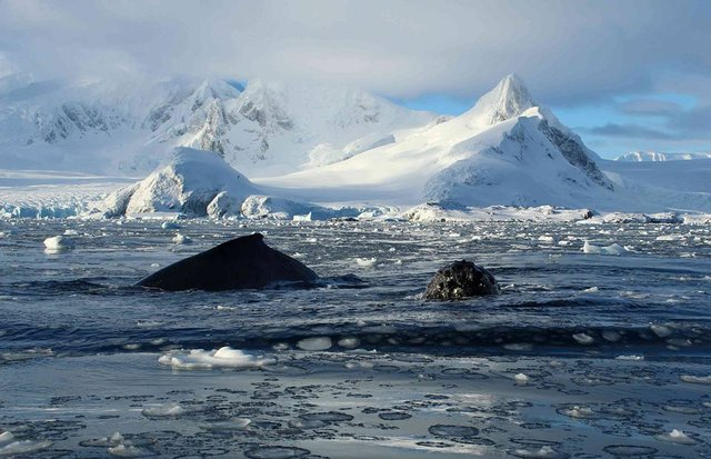 Українські полярники поділилися ефектними кадрами Антарктиди - фото 325267