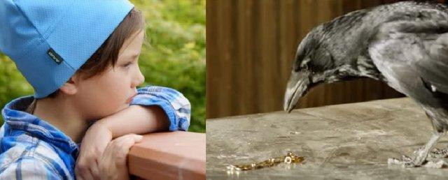 Як 4-річна дівчинка годувала ворон і подружилася з ними - фото 325893