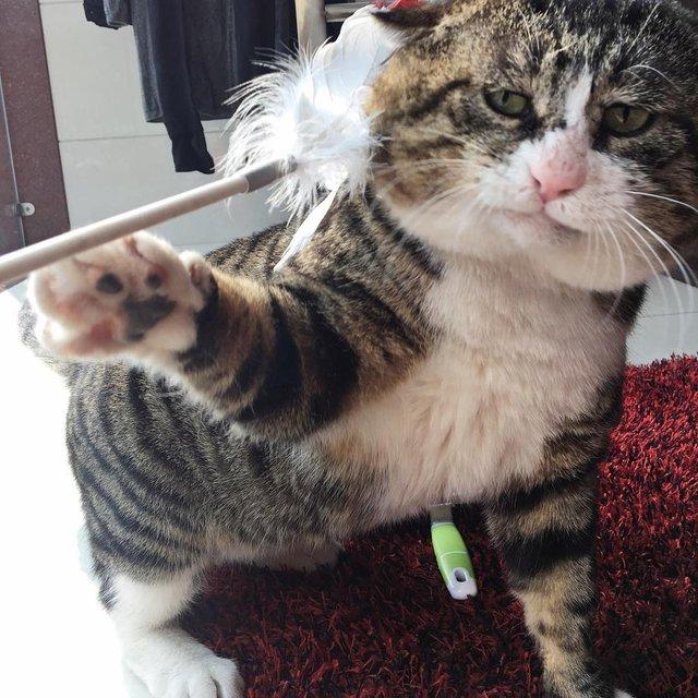 Король драми: реакція цього кота змушує сміятись - фото 326105