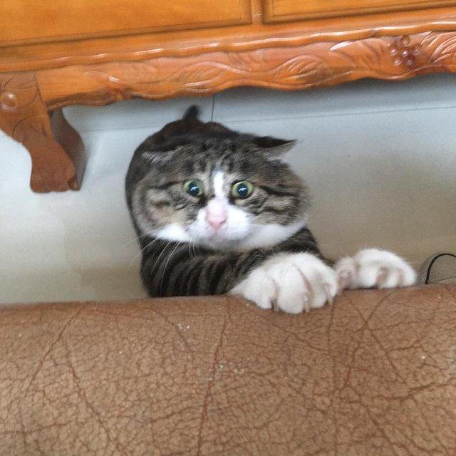 Король драми: реакція цього кота змушує сміятись - фото 326106