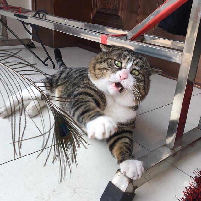 Король драми: реакція цього кота змушує сміятись - фото 326109