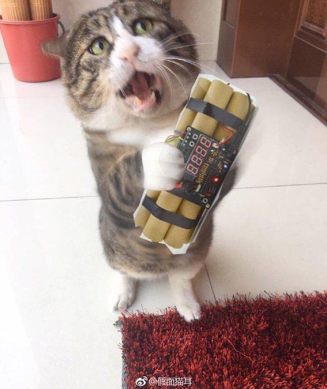 Король драми: реакція цього кота змушує сміятись - фото 326110