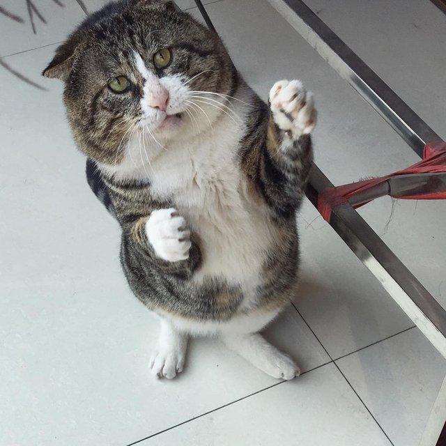 Король драми: реакція цього кота змушує сміятись - фото 326111
