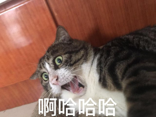 Король драми: реакція цього кота змушує сміятись - фото 326112