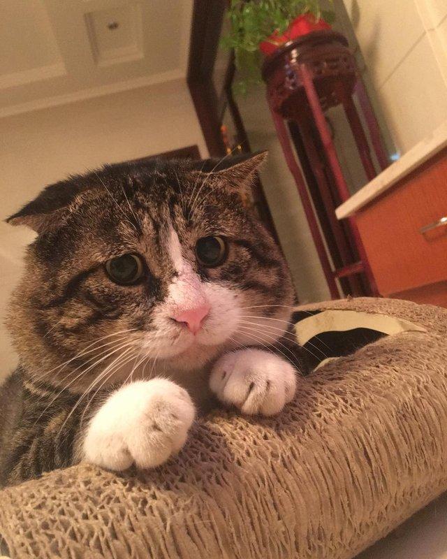 Король драми: реакція цього кота змушує сміятись - фото 326113