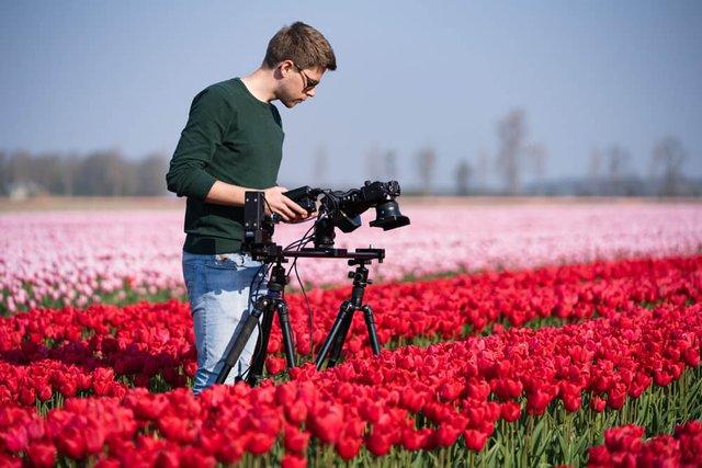 Неймовірні поля тюльпанів у Нідерландах: фото і відео - фото 327166