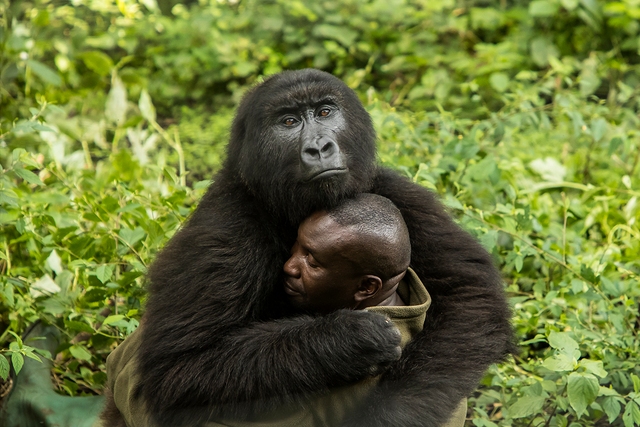 BigPicture Natural World: дивіться неймовірні фото переможців - фото 327753
