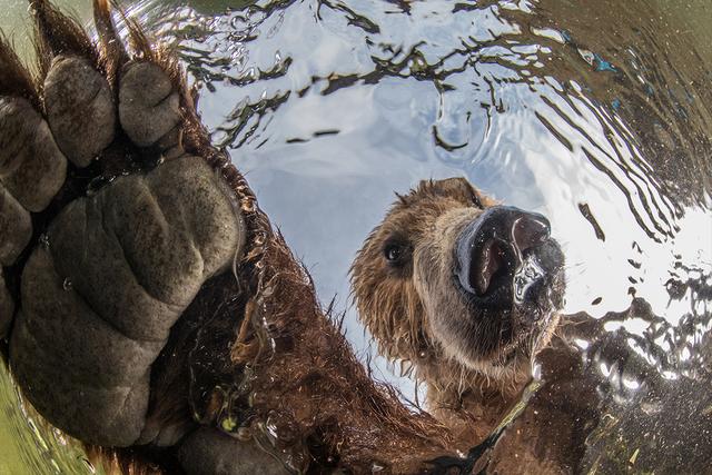 BigPicture Natural World: дивіться неймовірні фото переможців - фото 327754
