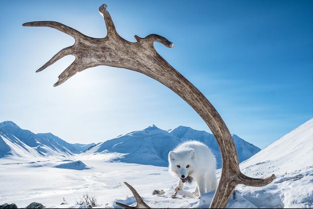 BigPicture Natural World: дивіться неймовірні фото переможців - фото 327756