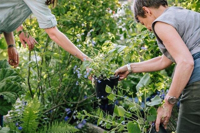 Дивіться, як королівська сім'я розважається в саду - фото 328899