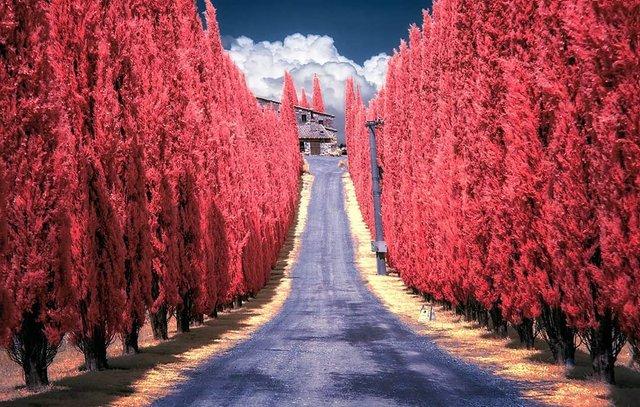Інфрачервоні фото іспанки, від яких важко відвести погляд - фото 328961