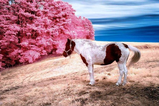 Інфрачервоні фото іспанки, від яких важко відвести погляд - фото 328972