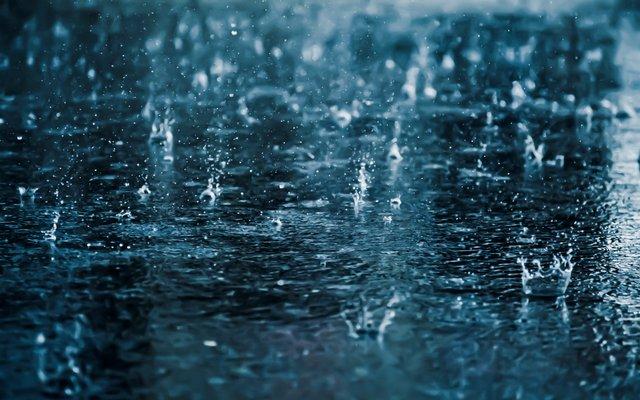 Пташиний спів свідчить про можливий дощ - фото 329290